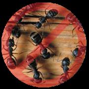 ants-remove